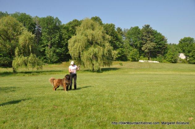 Estrela Mountain Dog 7.JPG