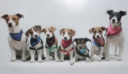 my_family_of_jack_russell_s.jpg