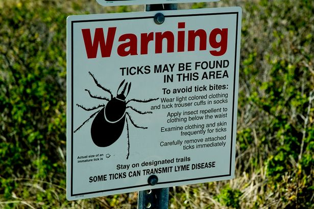 Warning-over-lyme-disease-threat-as-plague-of-ticks-expected-to-swarm-into-Britain-this-summer.jpg
